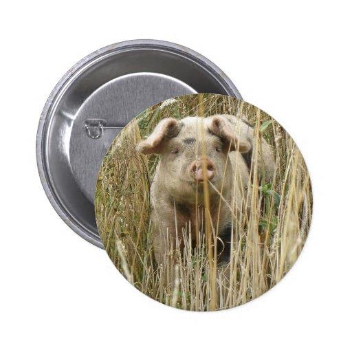 Cute Spotty Pig Button