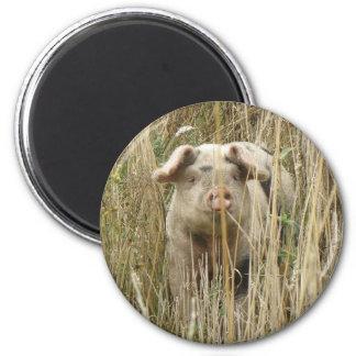 Cute Spotty Pig Magnet
