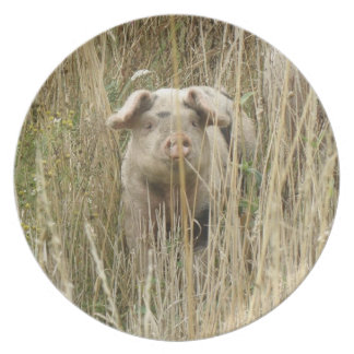 Cute Spotty Pig Plate