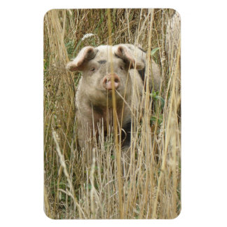 Cute Spotty Pig Premium Magnet