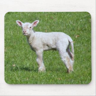 Cute Spring Lamb Mouse Mat