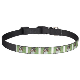 Cute Springer Spaniel Pet Collar