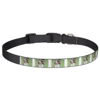 Cute Springer Spaniel Pet Collars