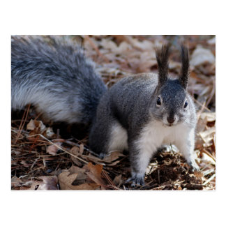 Cute Squirrel Autumn Leaf Fall Nature Destiny Postcard