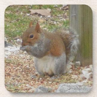 Cute Squirrel Coaster Set.