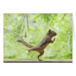 Cute Squirrel Doing Tai Chi Greeting Card