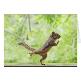 Cute Squirrel Doing Tai Chi Greeting Card