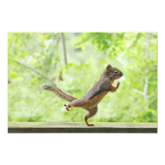 Cute Squirrel Doing Tai Chi Photo Print