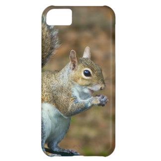 Cute Squirrel Eating Nut Photo iPhone 5C Case