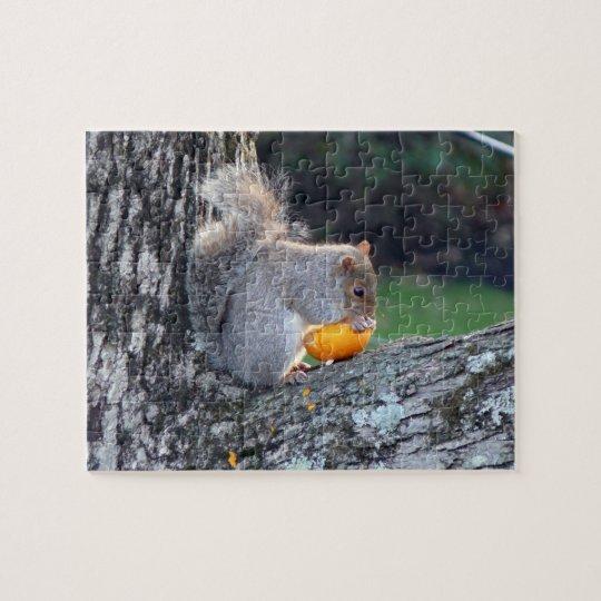 Cute Squirrel in Tree Eating Mini Pumpkin Difficul