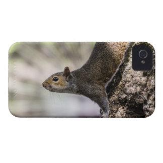 Cute Squirrel iPhone 4 Case