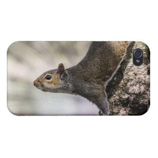 Cute Squirrel iPhone 4 Cover