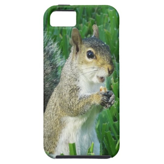 Cute Squirrel iPhone 5C Case and Covers