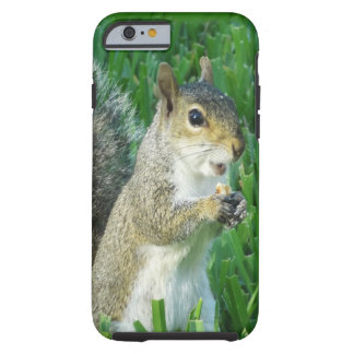 Cute Squirrel iPhone Case for New iPhone 6 Tough iPhone 6 Case