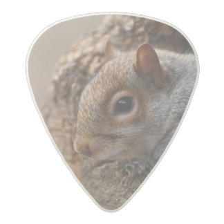 Cute squirrel looks out of her hole acetal guitar pick
