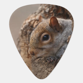 Cute squirrel looks out of her hole plectrum