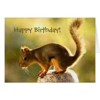 Cute Squirrel on a Cookie Jar Greeting Card