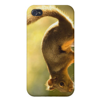 Cute Squirrel on a Cookie Jar iPhone 4 Cover