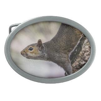 Cute Squirrel Oval Belt Buckle