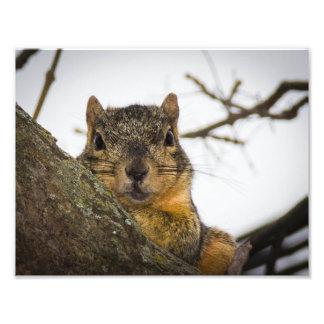 Cute Squirrel Photographic Print