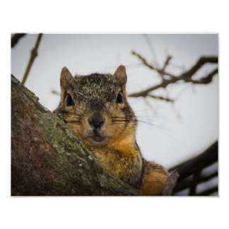 Cute Squirrel Poster