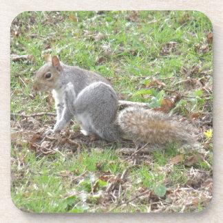 Cute Squirrel Scratching Coaster