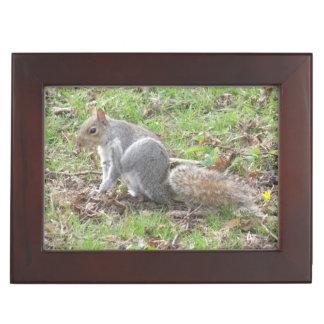 Cute Squirrel Scratching Keepsake Box