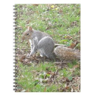 Cute Squirrel Scratching Notebook