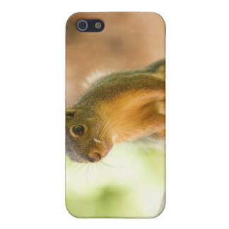 Cute Squirrel Smiling Case For iPhone 5