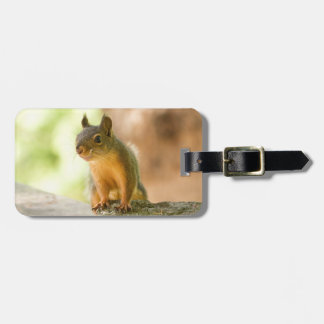 Cute Squirrel Smiling Travel Bag Tags