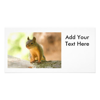 Cute Squirrel Smiling Customised Photo Card