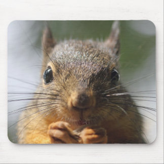 Cute Squirrel Smiling Photo Mouse Mat