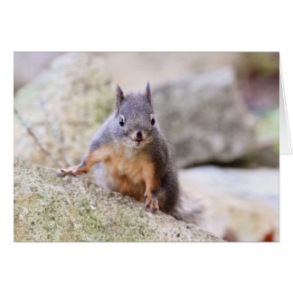 Cute Squirrel Staring Greeting Card