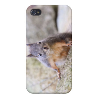 Cute Squirrel Staring Case For iPhone 4