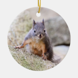 Cute Squirrel Staring Ornaments