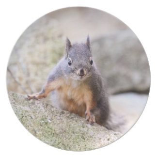 Cute Squirrel Staring Dinner Plate