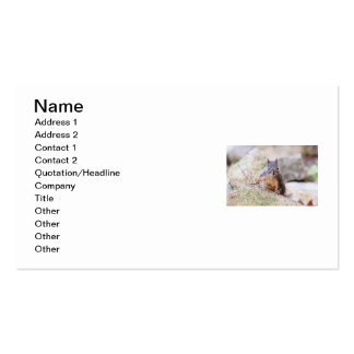 Cute Squirrel Staring Pack Of Standard Business Cards
