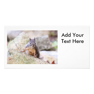 Cute Squirrel Staring Personalised Photo Card