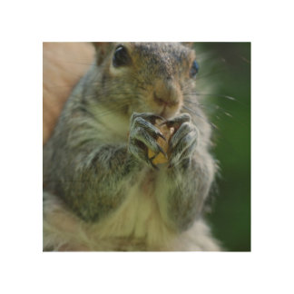 Cute Squirrel Wood Canvases