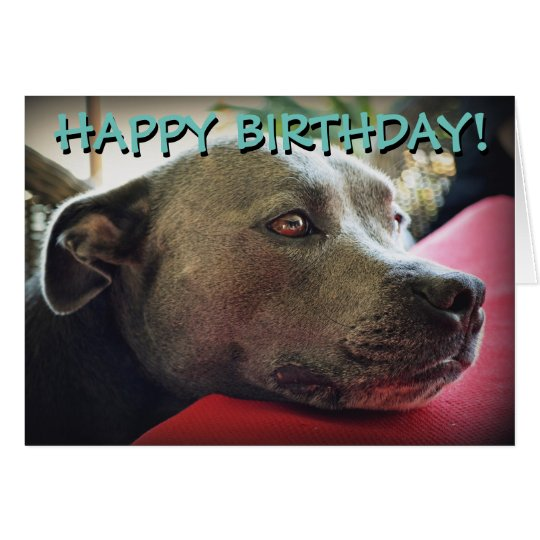 Cute staffy customized greetings card