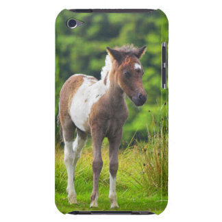 Cute Standing Dartmoor Pony Foal iPod Case-Mate Cases
