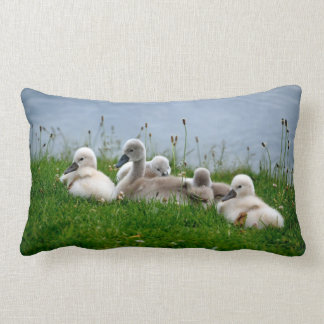 Cute Swan Cygnets - Pillow