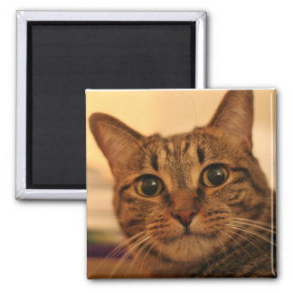 Cute tabby cat fridge magnet