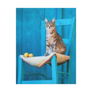 Cute Tabby Cat Kitten on a Blue Chair Photo Canvas Print