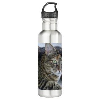 Cute Tabby Cat Photo 710 Ml Water Bottle
