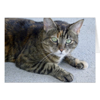 Cute Tabby Cat Photo Card