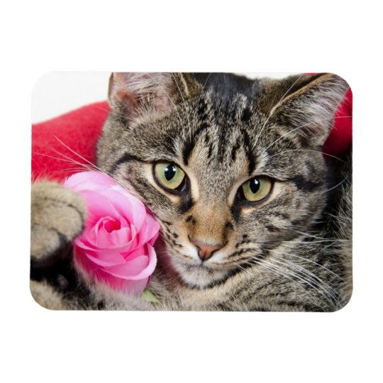 Cute Tabby Cat With Rose Rectangular Photo Magnet