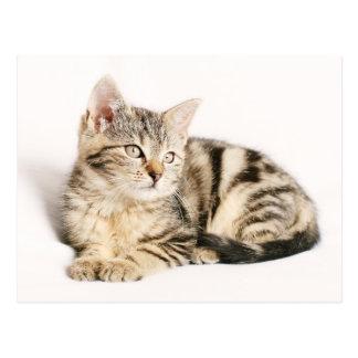 Cute Tabby Kitten Postcard