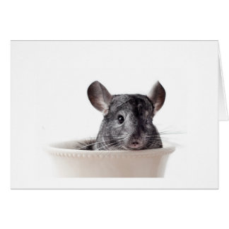 Cute Teacup Chinchilla Grey Greeting Cards