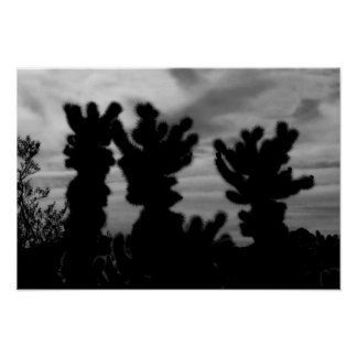 CUTE Teddy Bear Cholla Cactus Poster